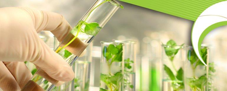 Bitkisel Üretim ve Teknolojileri